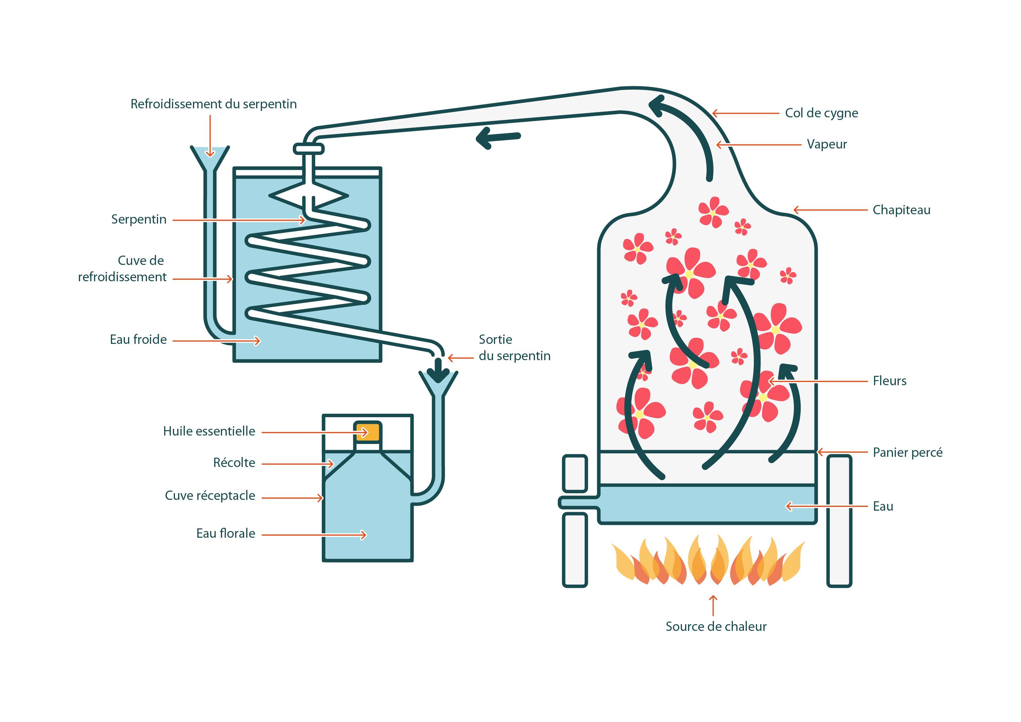 Processus de production d'une huile essentielle - Setalmaa