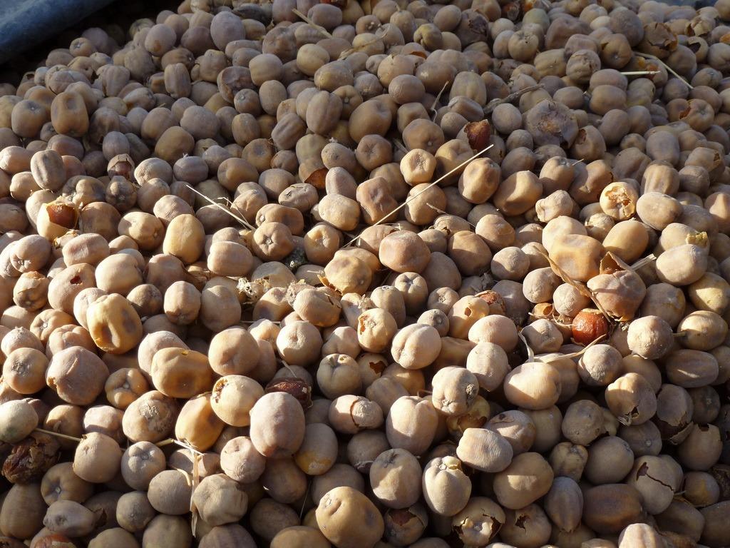 Huiles végétales : dattes du désert